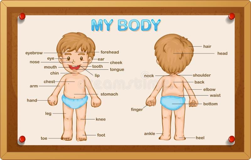 Littlyjongen en lichaamsdelen royalty-vrije illustratie