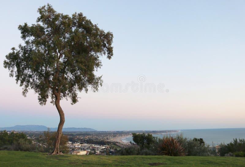 Littoral de négligence d'arbre excentré photo stock