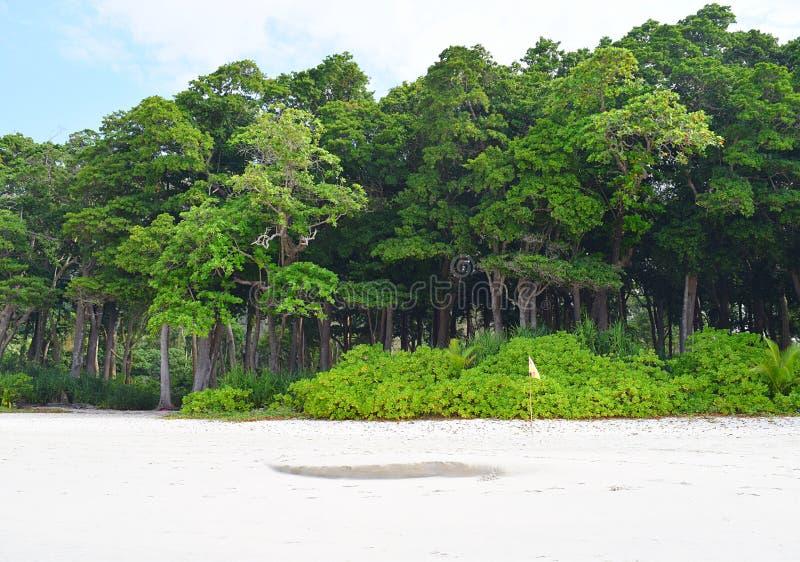 Littoral las z Dennymi Mahua drzewami i bujny Zieloną roślinnością przy Białą Piaskowatą plażą, Andaman wyspy, India zdjęcie stock