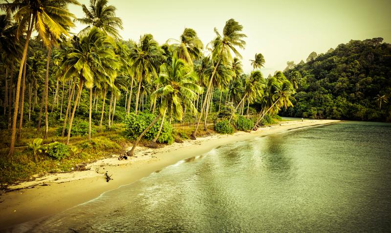 Littoral tropical photo libre de droits