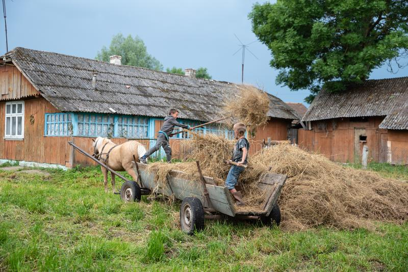 Litynia村庄,乌克兰- 2018年6月02日:两个年轻男孩投掷干草在推车外面,库存家畜的干草 生活在村庄 库存图片