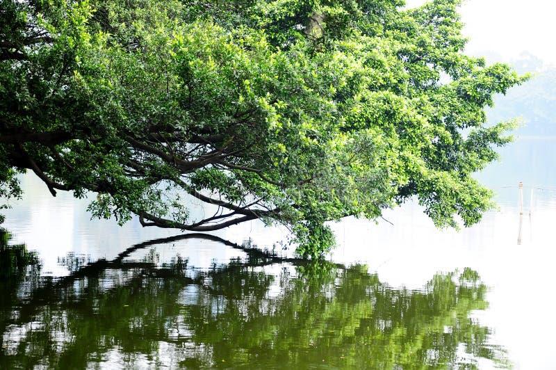 Liuhua lake park scenery stock photos