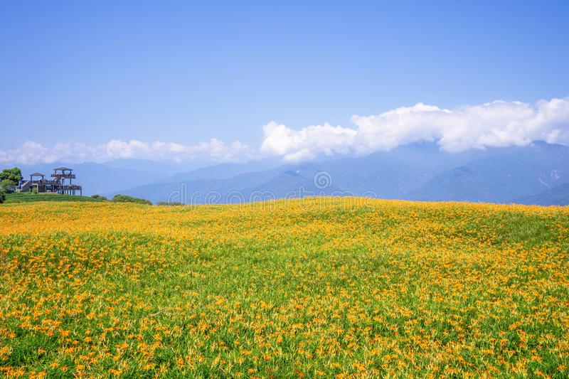 Liushidan山六十岩石山的美丽的橙色黄花菜花农场与天空蔚蓝和云彩在台湾花莲富里乡, 库存照片