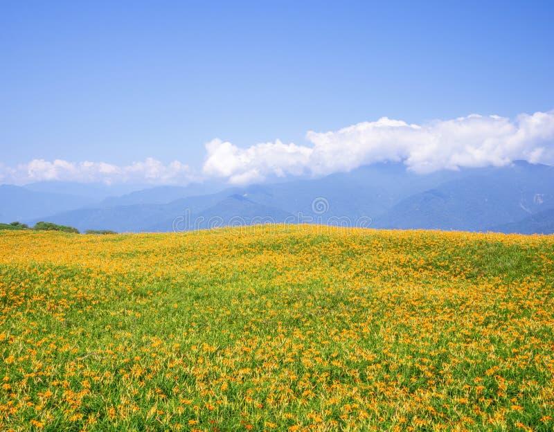 Liushidan山六十岩石山的美丽的橙色黄花菜花农场与天空蔚蓝和云彩在台湾花莲富里乡, 免版税库存照片