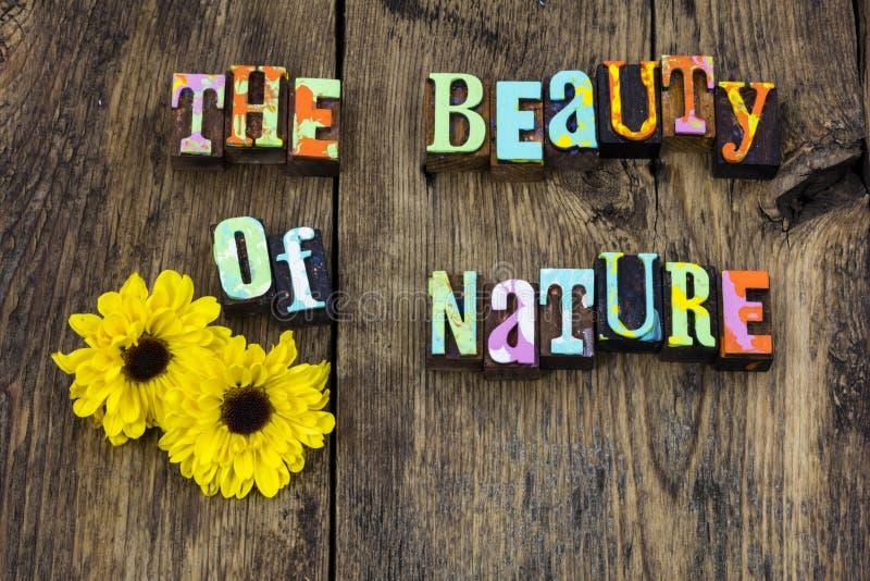 Liv för renhet för blomma för skönhetnaturmirakel naturligt arkivbild