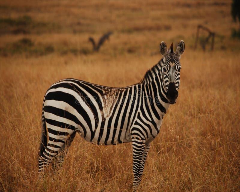 Liv på savannahen arkivfoto