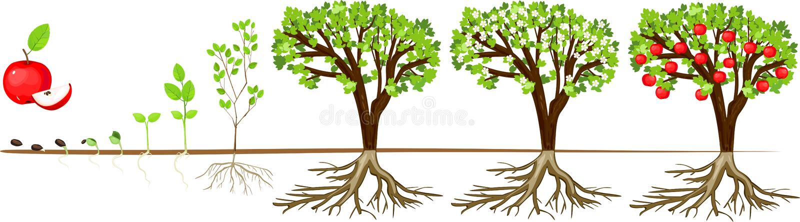 Livcirkulering av äppleträdet Etapper av tillväxt från kärnar ur till den vuxna växten med frukter stock illustrationer