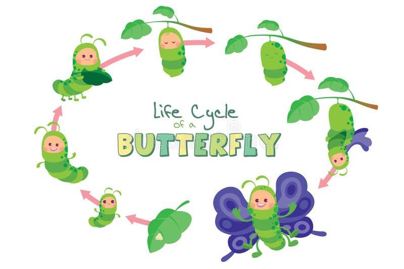 Livcirkulering av en fjäril vektor illustrationer