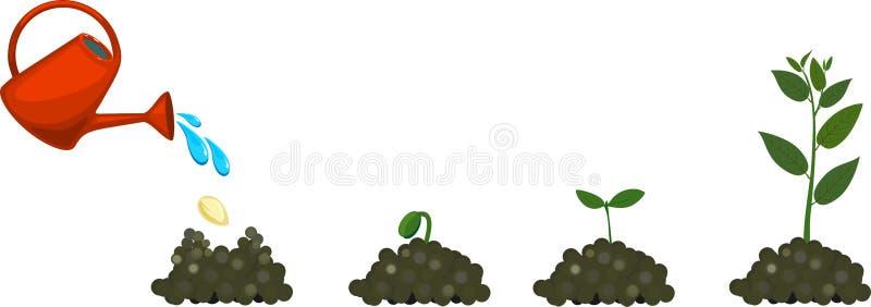 Livcirkulering av växten vektor illustrationer