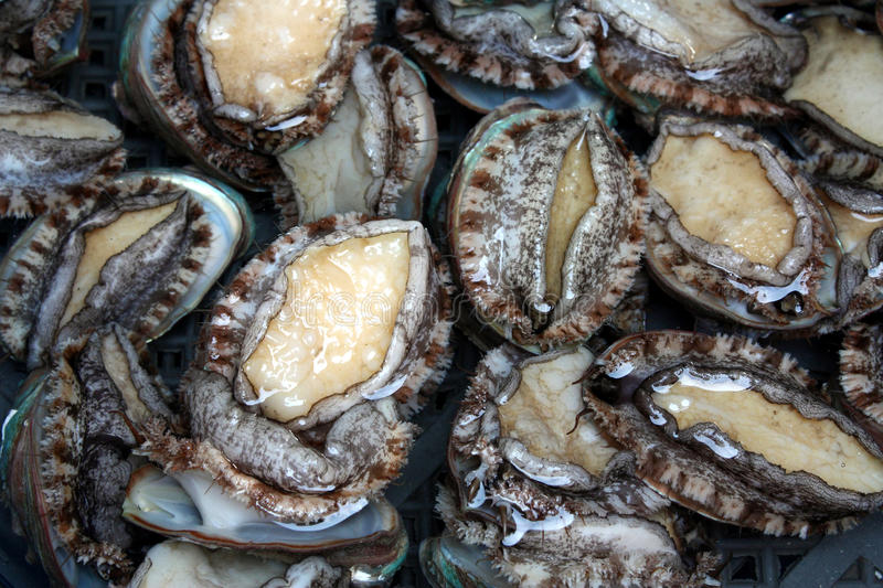 Download Live Abalones stock image. Image of healthy, seafood - 26457293