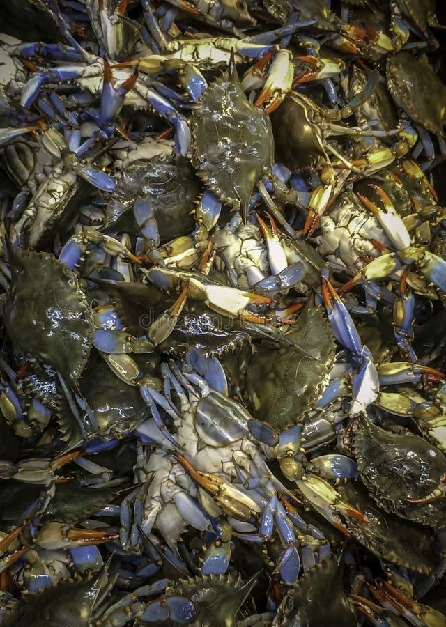 Live Blue Crab On Ice frais sur le marché asiatique photographie stock libre de droits