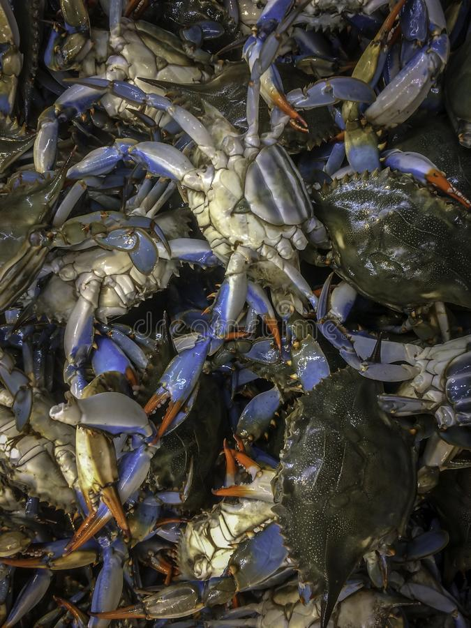 Live Blue Crab On Ice fresco no mercado asiático fotos de stock