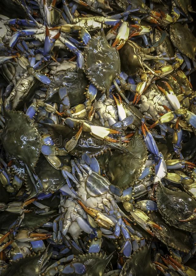Live Blue Crab On Ice fresco no mercado asiático fotografia de stock royalty free