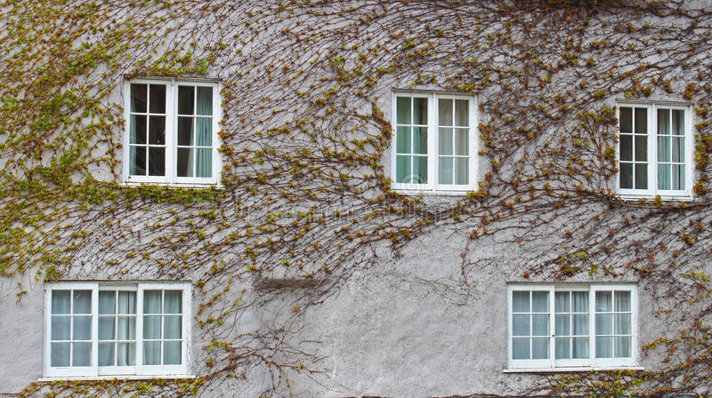Live Building With Climbing Vines Royalty Free Stock Photography