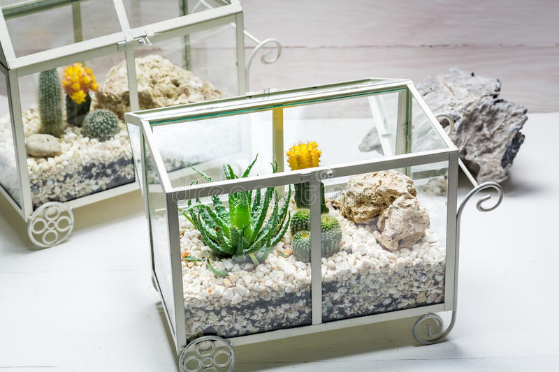 Live cactus in a terrarium with self ecosystem royalty free stock images