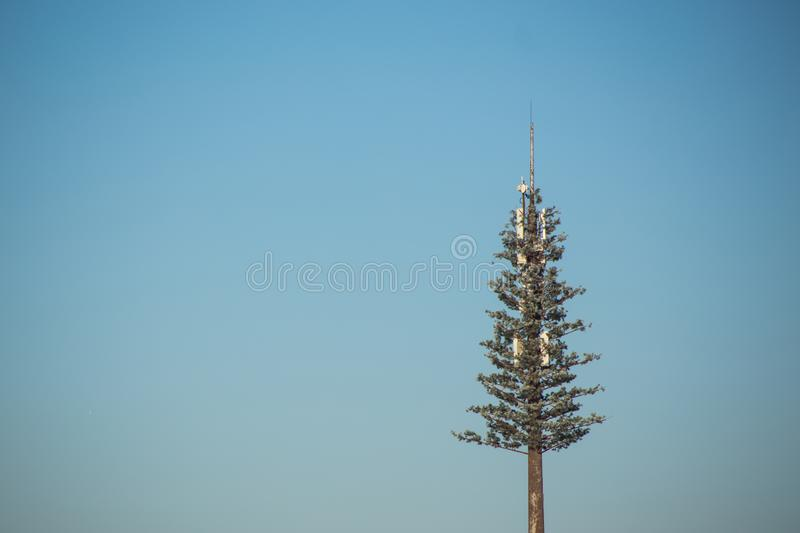 Live Christmas tree rushes high into sky on long bare trunk against background of boundless blue sky. Amazing live Christmas tree rushes high into sky on long stock photography