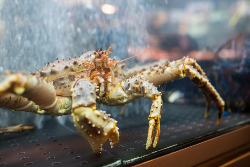 Live crab on sale stock photography