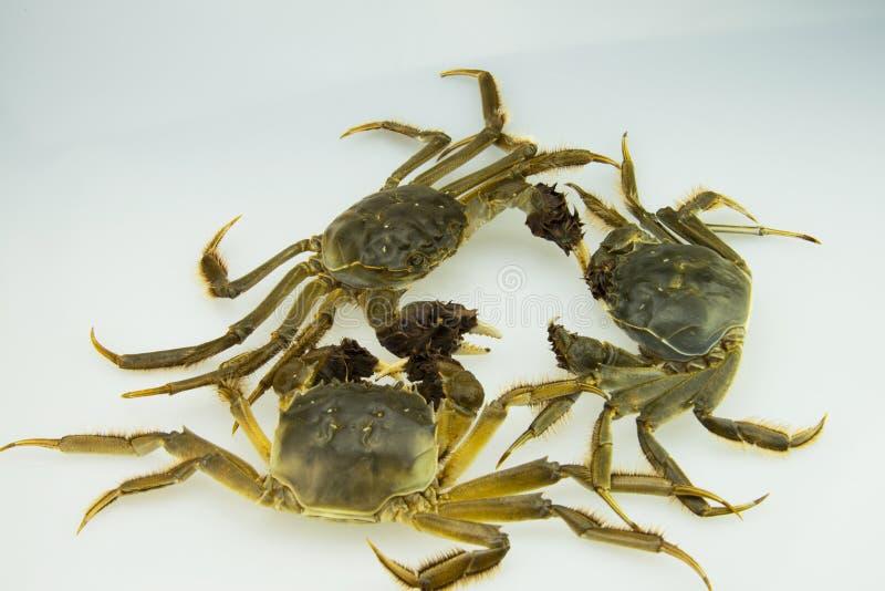 Live Crabs stock afbeeldingen
