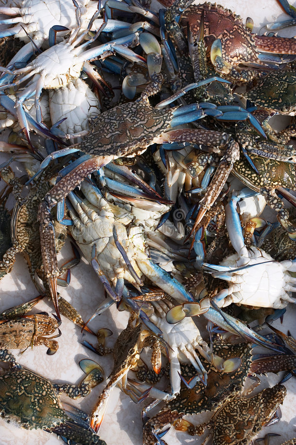 Live crabs from the Arab Gulf royalty free stock photography