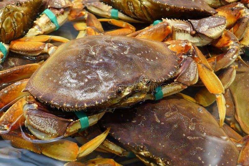 Live Crabs con gli artigli legati in un supermercato fotografie stock libere da diritti