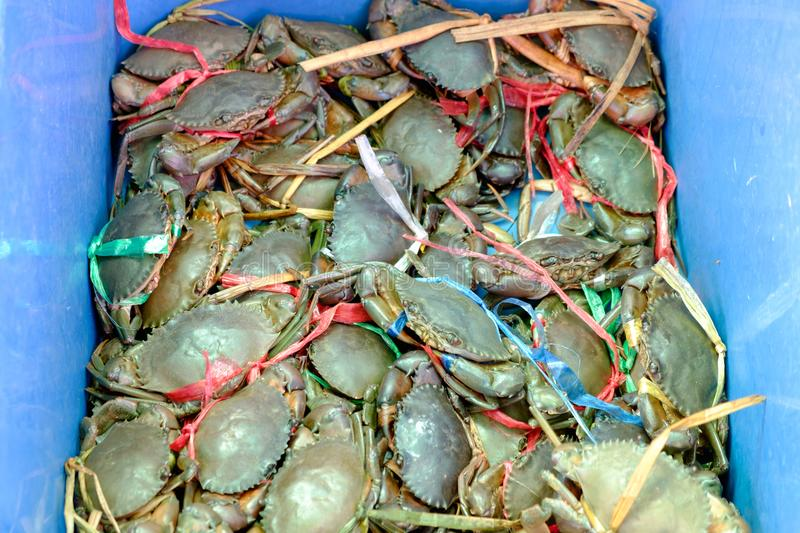 Live Crabs Were Tied With Rope, Put A Bucket On Sale At The