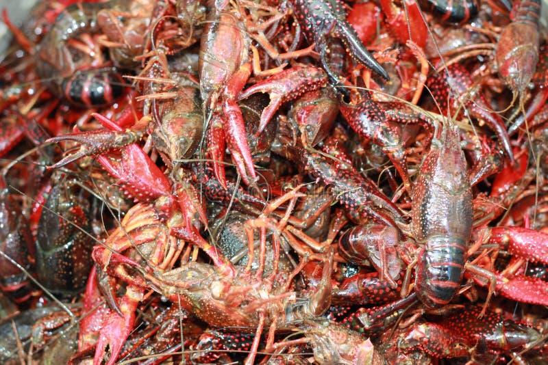 Live Crawfish, die in een pot wachten worden gezet voor het koken in Louisiane royalty-vrije stock afbeeldingen