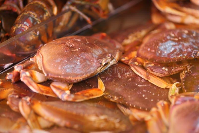 Live Dungeness Crab in Markt stock afbeeldingen