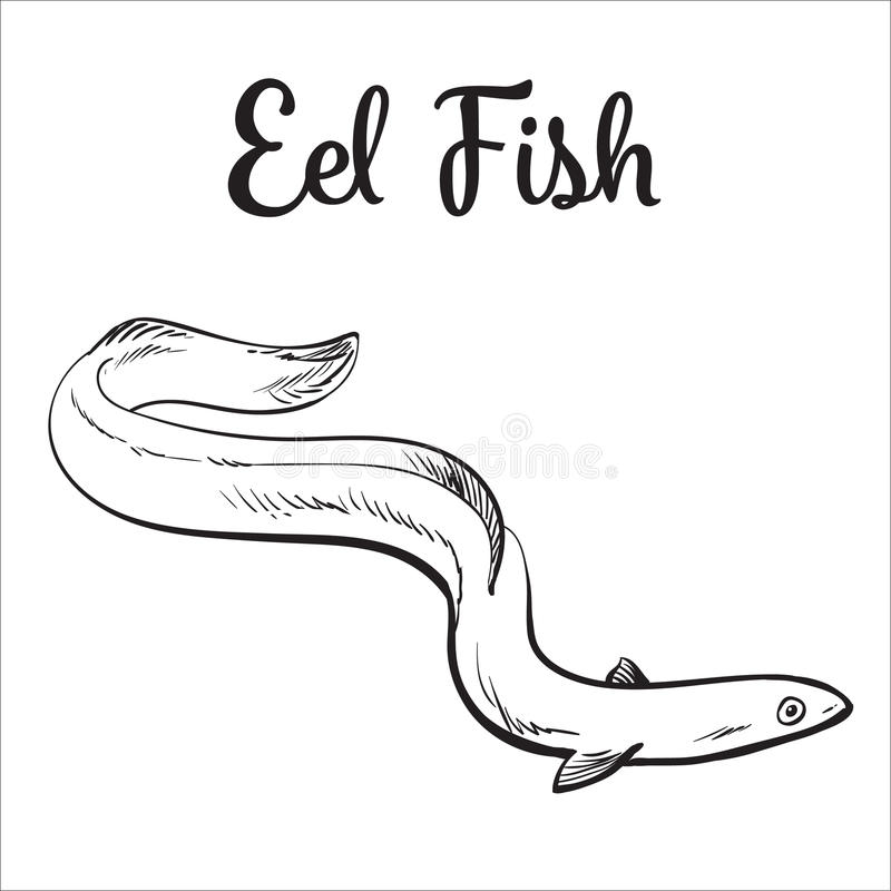 Live eel fish on white background. Live eel fish, sketch style vector illustration on white background. Drawing of eel fish as luxury seafood delicacy. Edible stock illustration