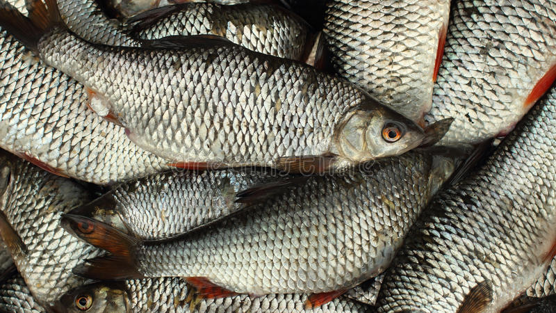 Live fish full basket stock photos