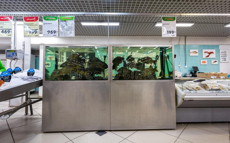Live fish ready for sale in the supermarket. Samara, Russia - February 11, 2018: Live fish ready for sale in the supermarket Karusel. One of largest food stock images