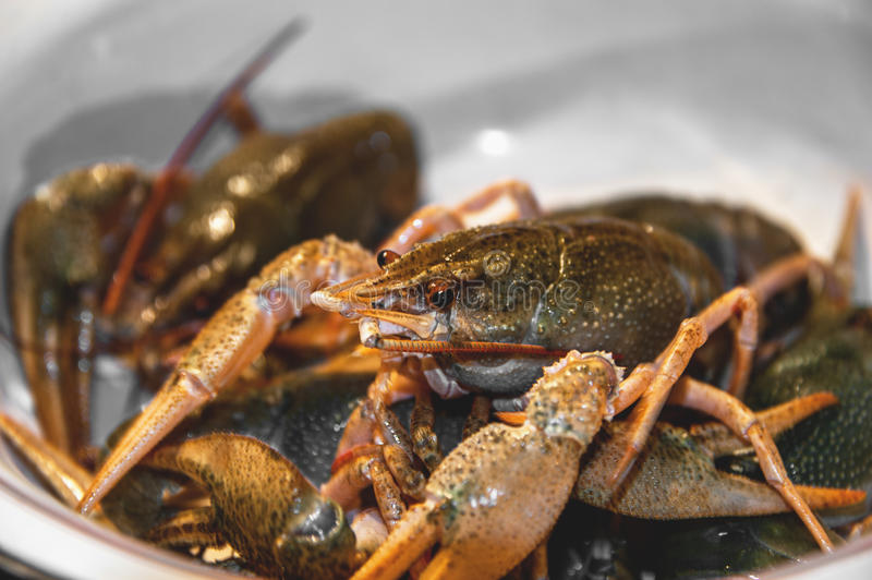 Live green crayfish on a large dish before cooking. Close-up. The horizontal frame stock images