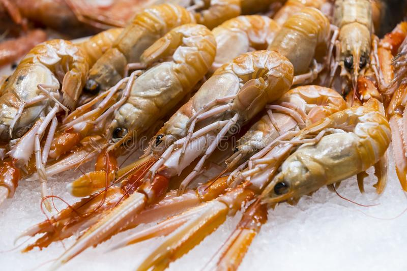 Live lobster on the ice shelf. Of the store on ice royalty free stock photography