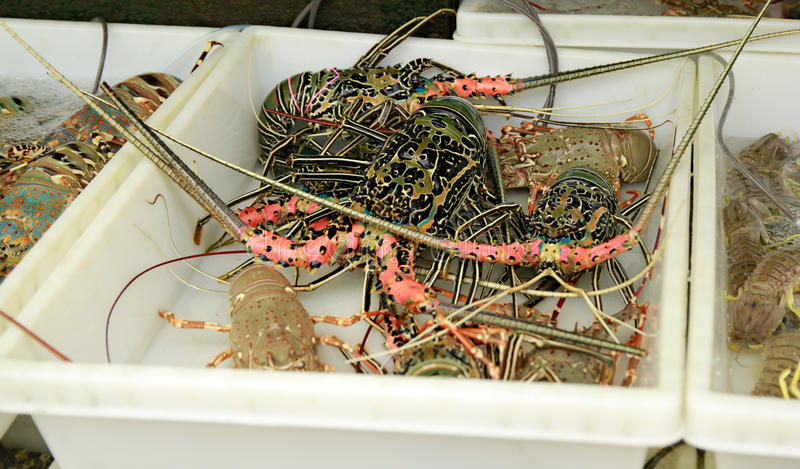 Live Lobsters bij Vissenmarkt Zeevruchten stock afbeelding