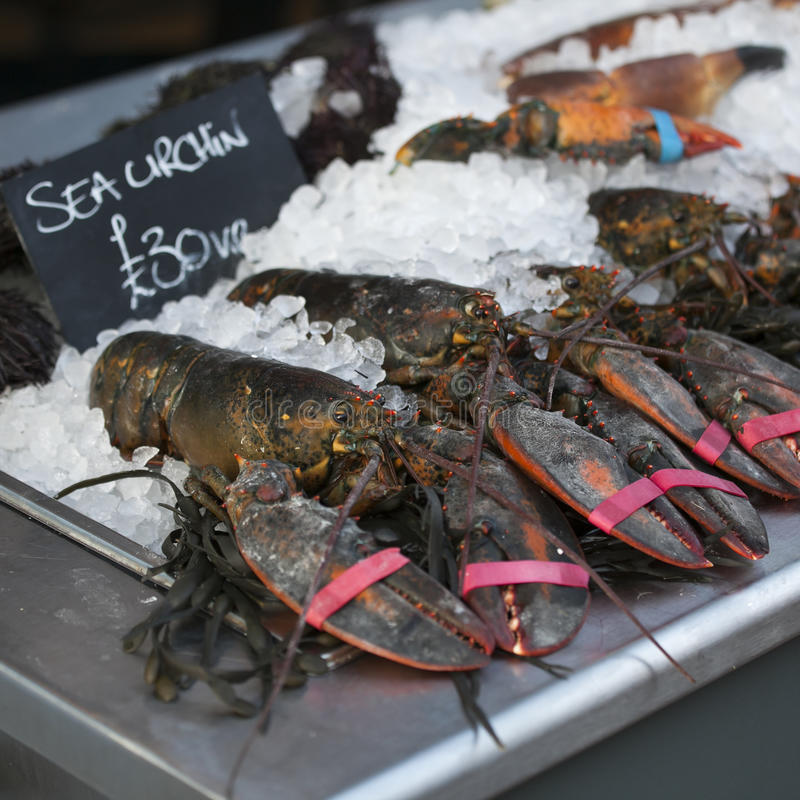 Live lobsters on ice for sale royalty free stock photos