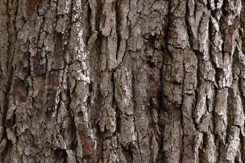 Download Live oak tree stock photo. Image of outdoors, closeup, urban - 169642