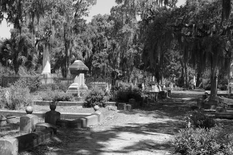 Download Live Oak Trees En Un Cementerio De Georgia Imagen de archivo - Imagen de majestuoso, sabana: 100535773