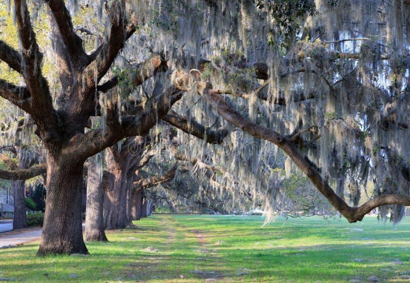 Live Oak Trees och spanjor Moss Savannah Georgia arkivbild