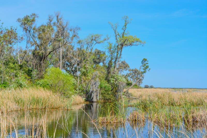 Live Oaks med mexicansk mossa på Savannah National Wildlife Refuge i Hardeeville, Jasper County, South Carolina USA royaltyfri foto