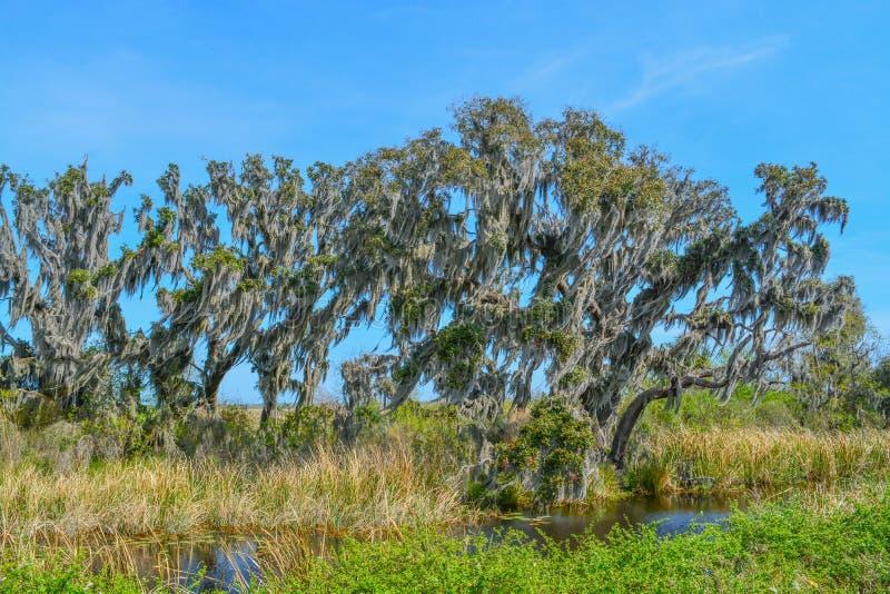 Live Oaks med mexicansk mossa på Savannah National Wildlife Refuge i Hardeeville, Jasper County, South Carolina USA royaltyfria foton