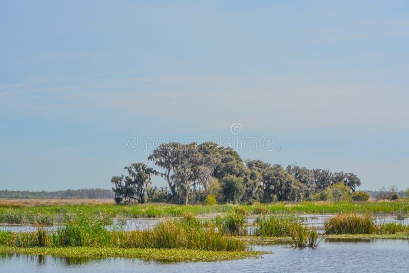 Live Oaks med mexicansk mossa på Savannah National Wildlife Refuge i Hardeeville, Jasper County, South Carolina USA royaltyfri fotografi