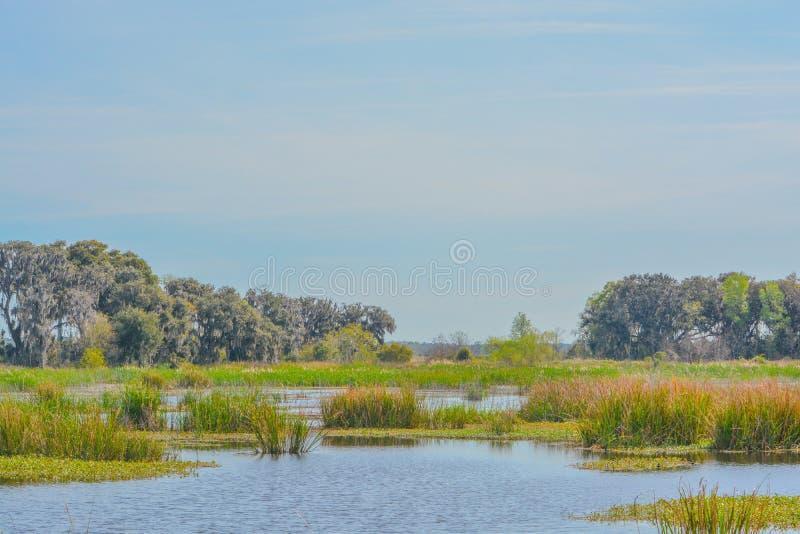 Live Oaks med mexicansk mossa på Savannah National Wildlife Refuge i Hardeeville, Jasper County, South Carolina USA arkivbild