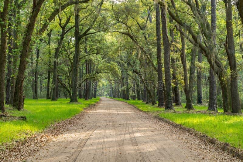 Live Oaks mit Linie Schotterweg des spanischen Mooses auf Edisto-Insel nahe Charleston, Sc lizenzfreie stockfotografie
