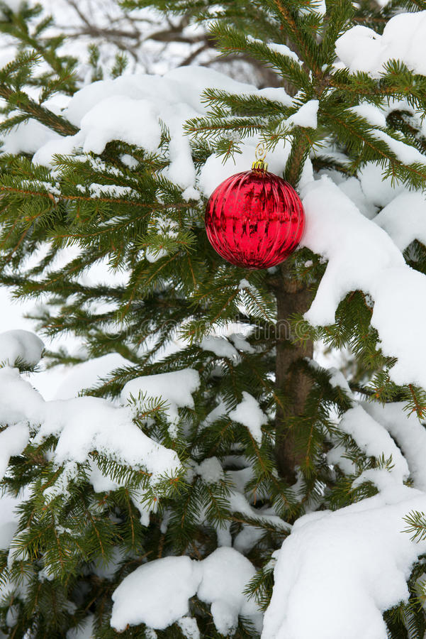 Live Real Christmas Tree, Schnee, einzelne rote Verzierungs-Dekoration stockfotografie
