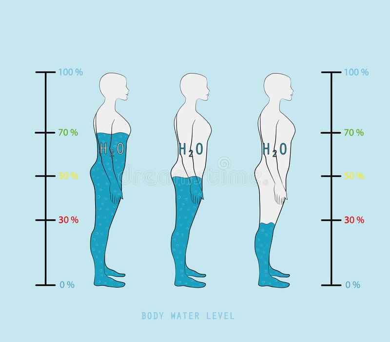 Livello di mostra infographic di percentuale dell'acqua della siluetta della donna nell'illustrazione di vettore del corpo umano illustrazione vettoriale