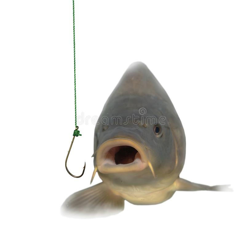 Free Lively Carp And Empty Hook Stock Photography - 12492102