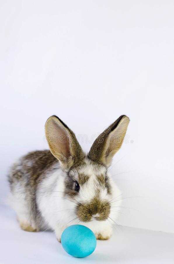 Lively little cute rabbit on a white background. stock photos