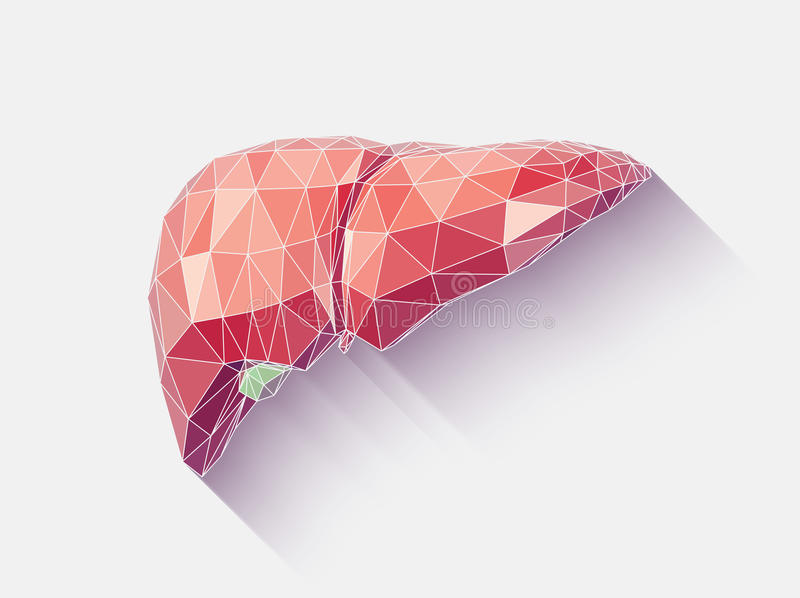 Liver faceted. Vector illustration of human liver with faceted low-poly geometry effect vector illustration