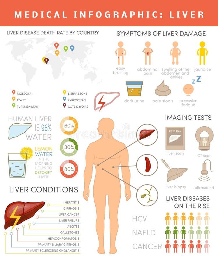 Liver infographic stock illustration