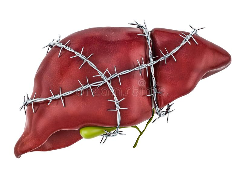 Liver Pain concept. Human liver with barbed wire. 3D rendering vector illustration