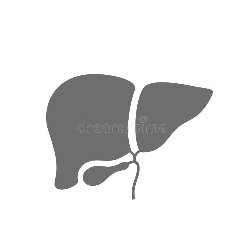 Liver vector icon stock illustration